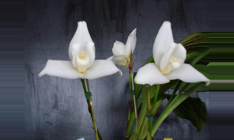 Tour de Orquídeas Cobán