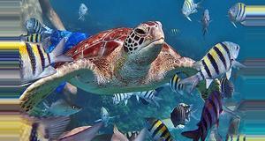 Belize Coral Gardens Tour