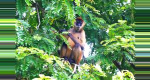 Costa Rica Caminata Curú
