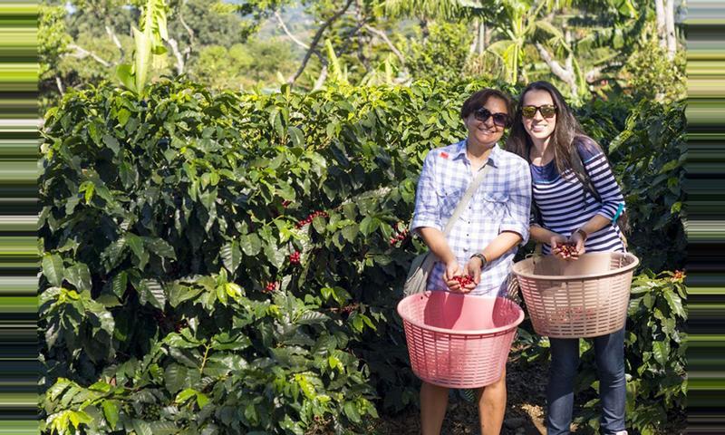 Doka Estate Coffee Tour Costa Rica