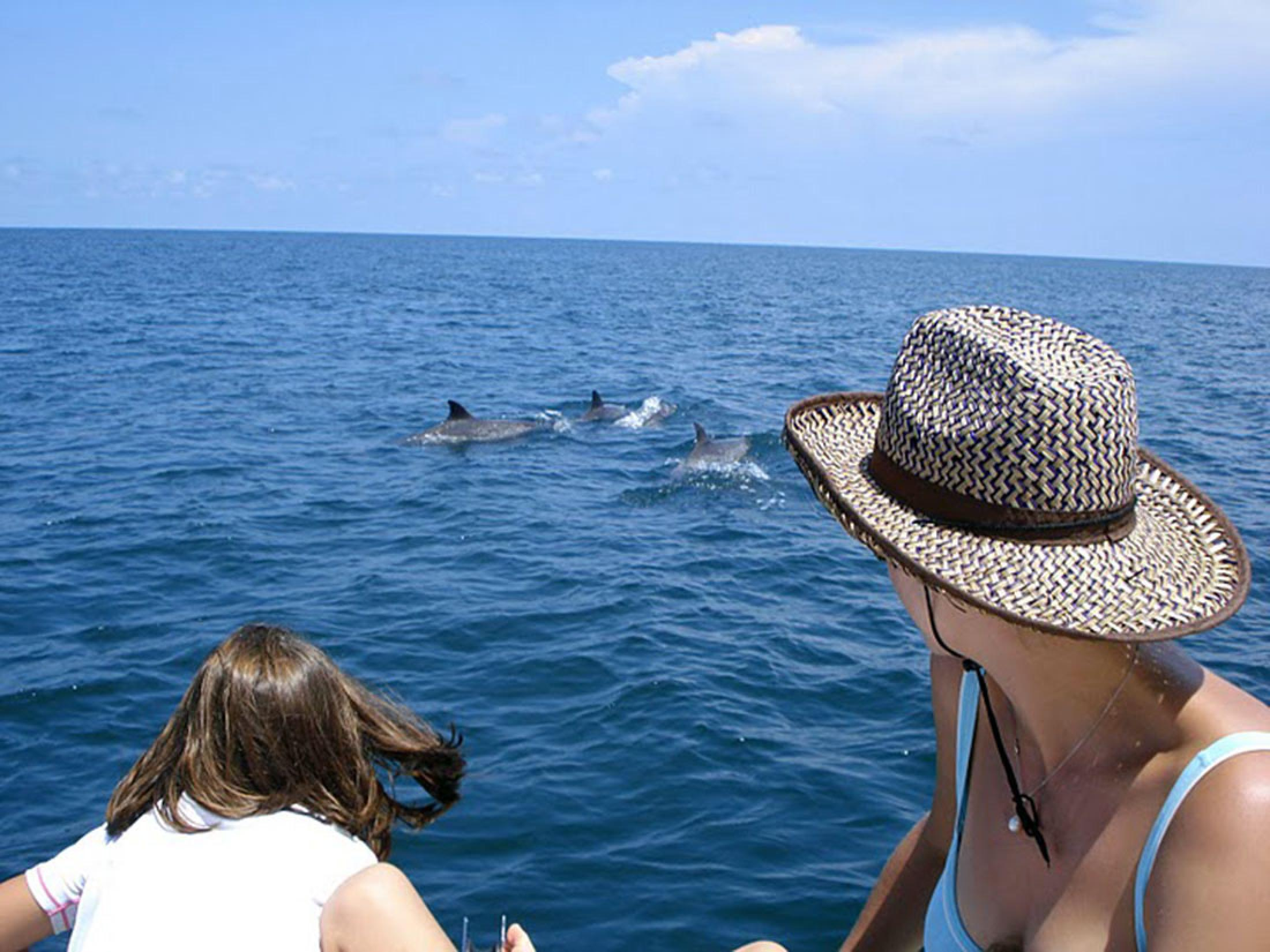 Dolphin Watching and Snorkeling