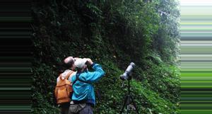 Costa Rica Avistamiento de Aves por la Mañana