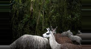 Ecuador El Cajas National Park
