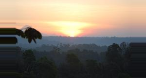 Guatemala Finca Las Nubes 2-day Birdwatching