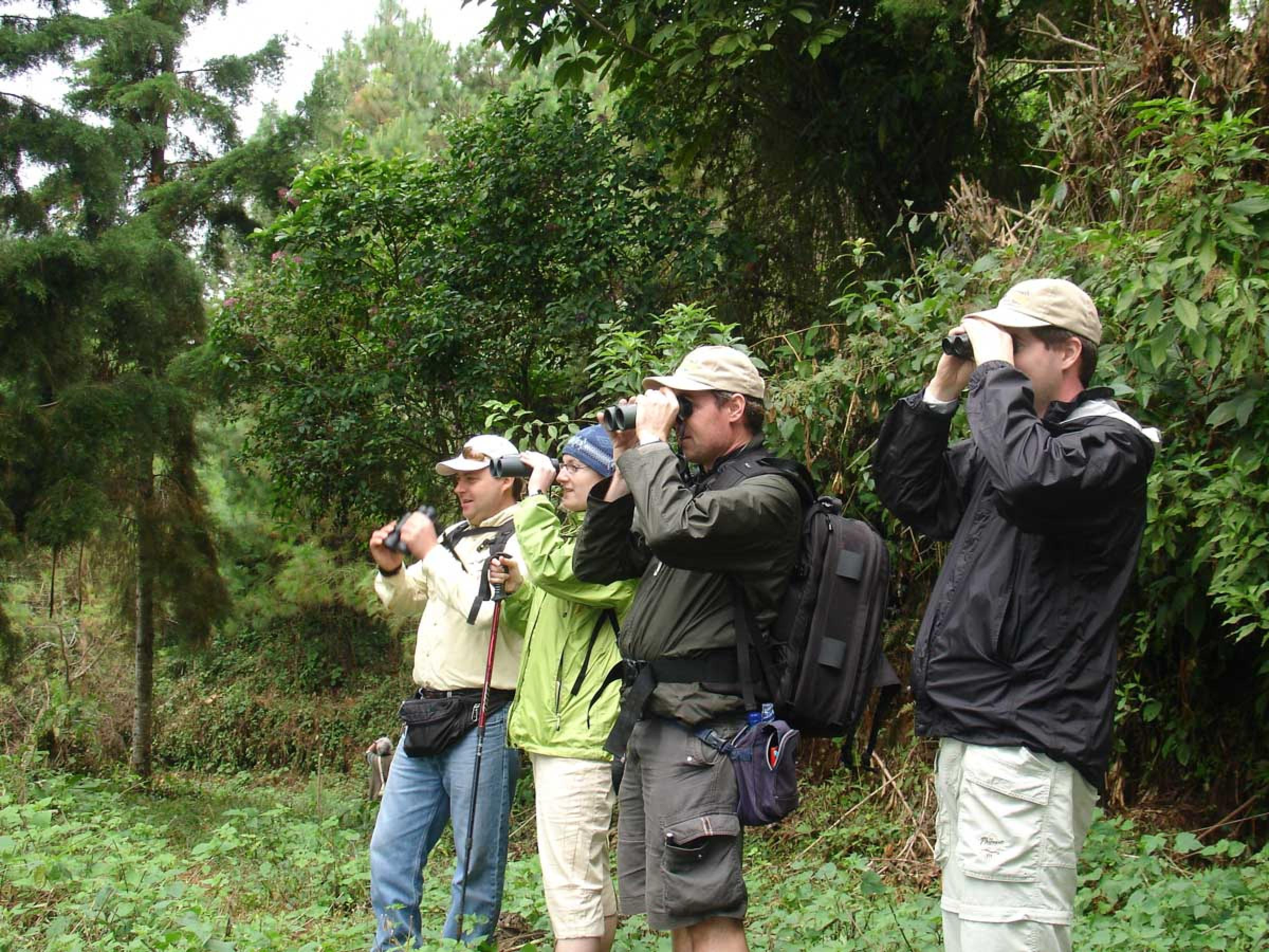 Finca Las Nubes 2-day Birdwatching