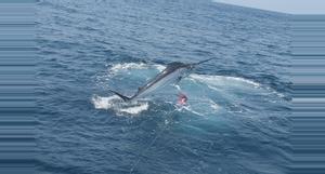 Ecuador Tour de Pesca