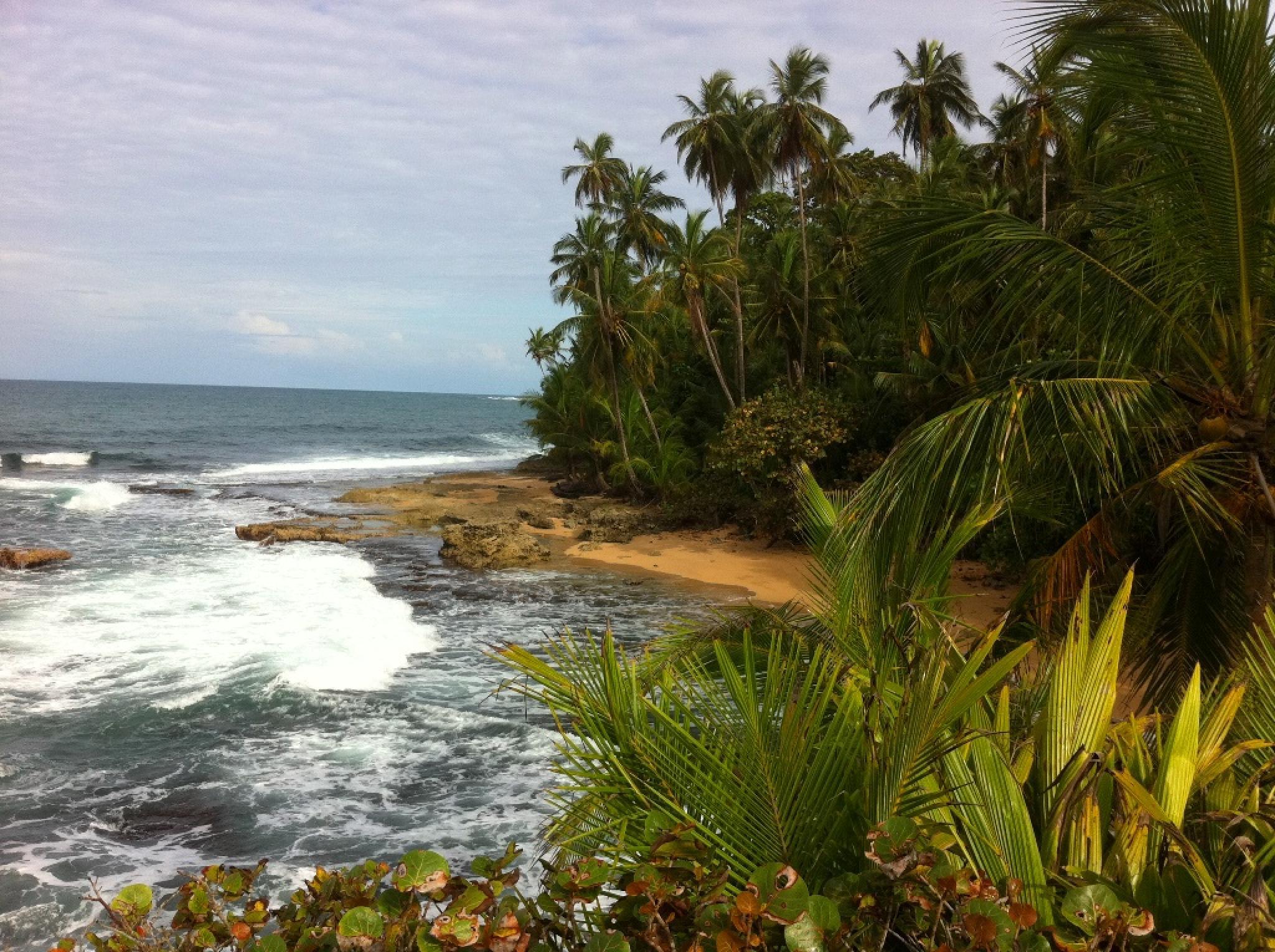 Caminata por la Reserva Silvestre Gandoca Manzanillo