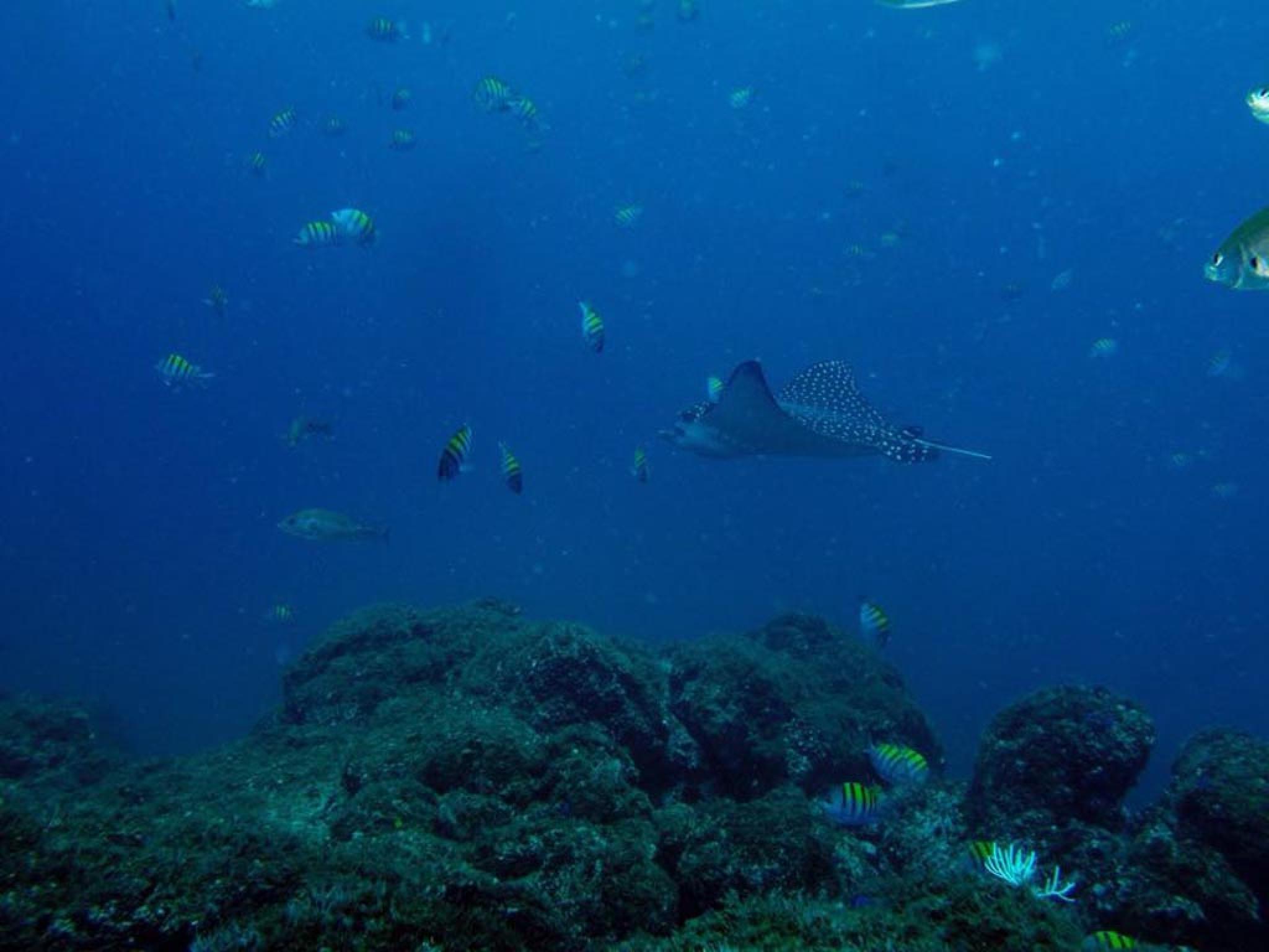 Snorkeling en Guanacaste