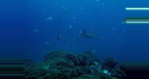 Costa Rica Snorkeling en Guanacaste