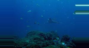 Costa Rica Guanacaste Snorkeling