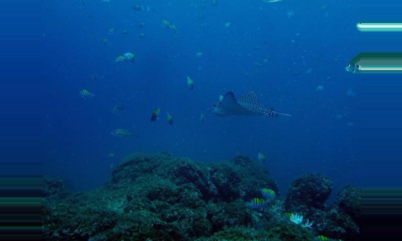 Guanacaste Snorkeling