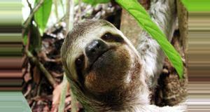 Costa Rica Manuel Antonio National Park Guided Tour