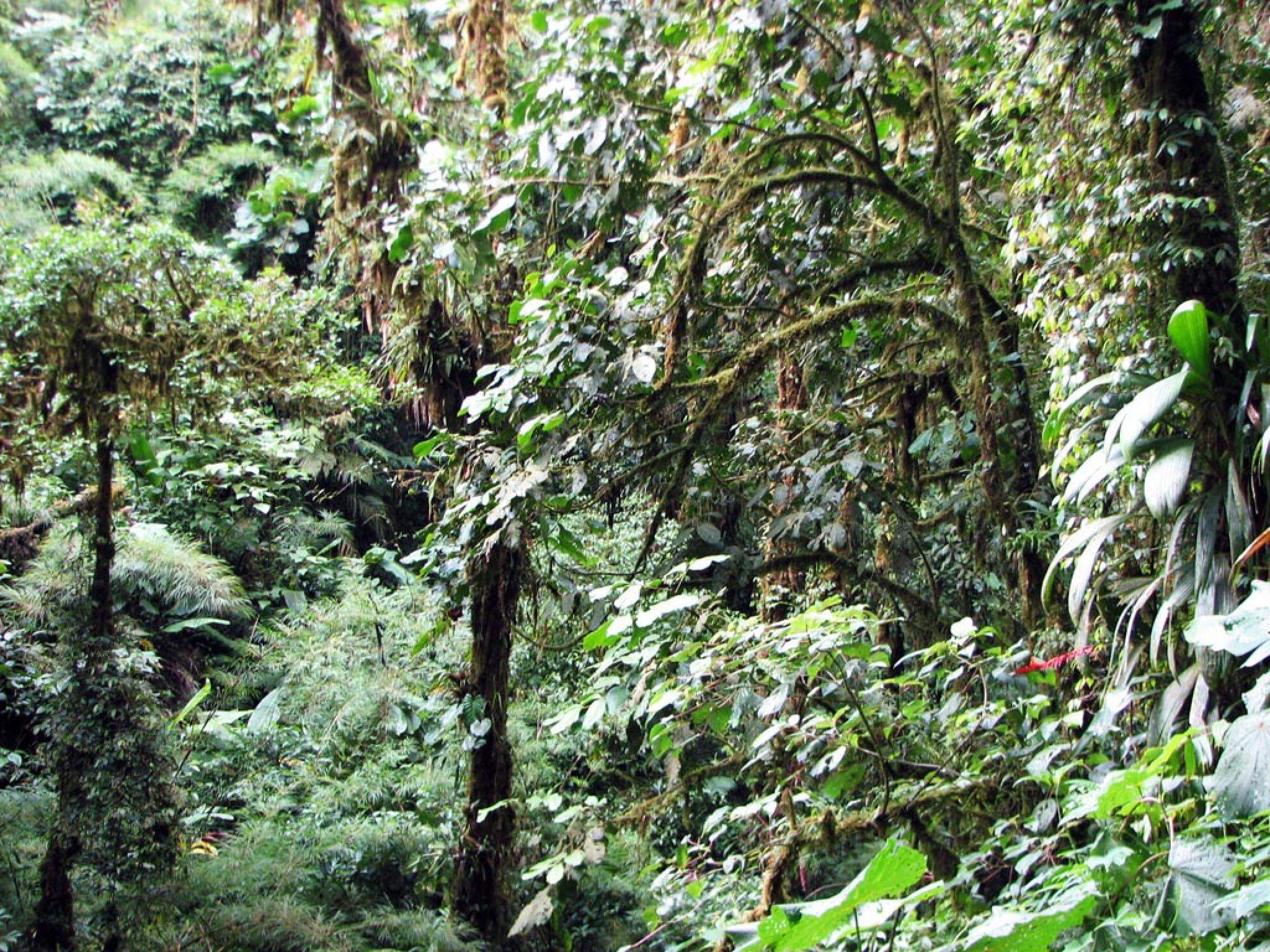 Guided Tour Santa Elena Reserve