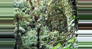 Costa Rica Guided Tour Santa Elena Reserve