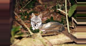 Costa Rica Caminata Nocturna en la Reserva Valle Escondido
