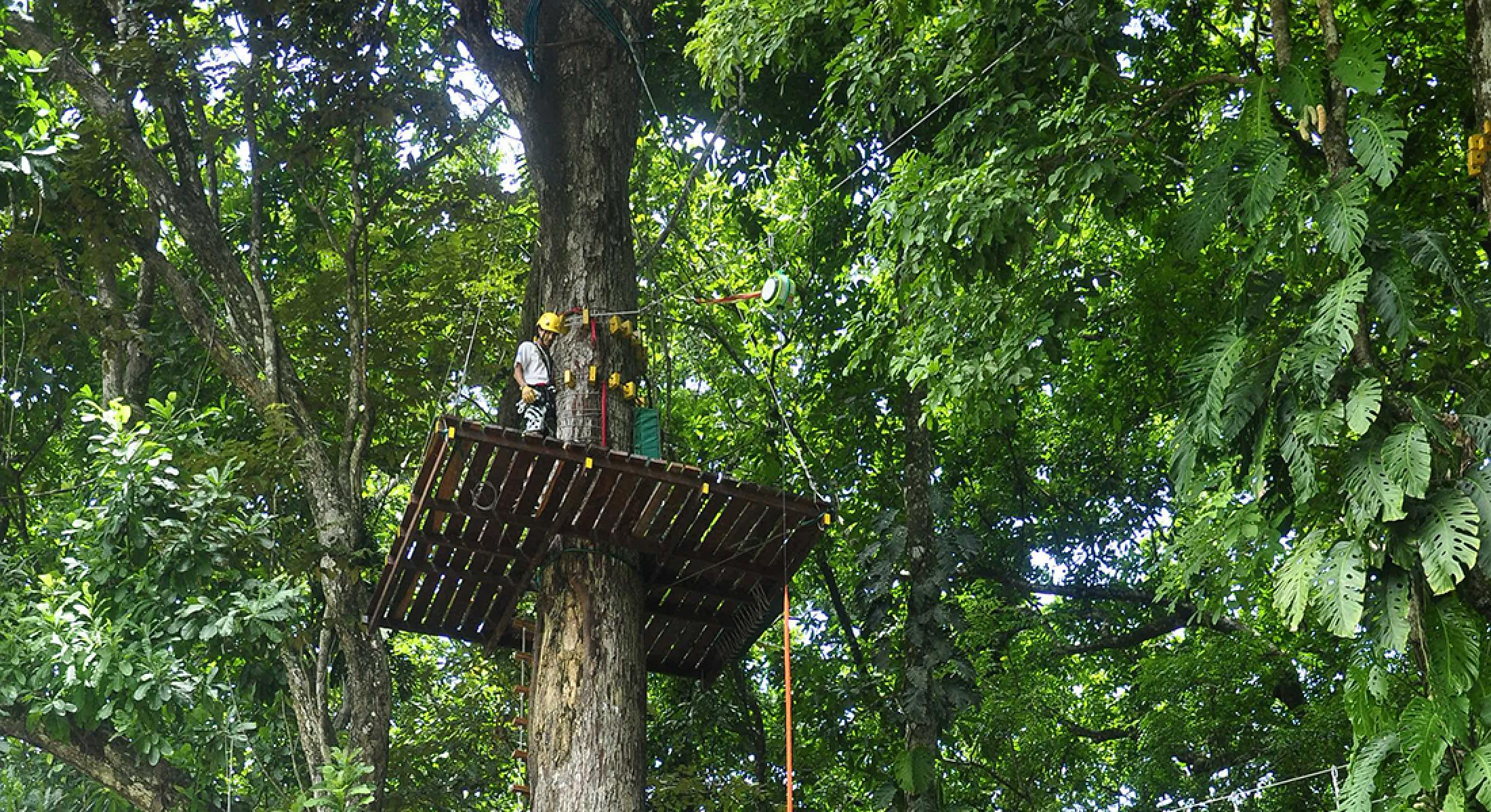High Ropes Course and Ceiba Rappel Tour
