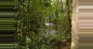 Costa Rica Tour de Senderismo en la Haciendo Pozo Azul