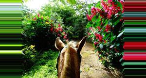 Costa Rica Jungle and Barigona Beach Horseback riding tour
