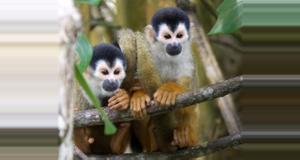 Costa Rica Kokopelli Tour de Manglar