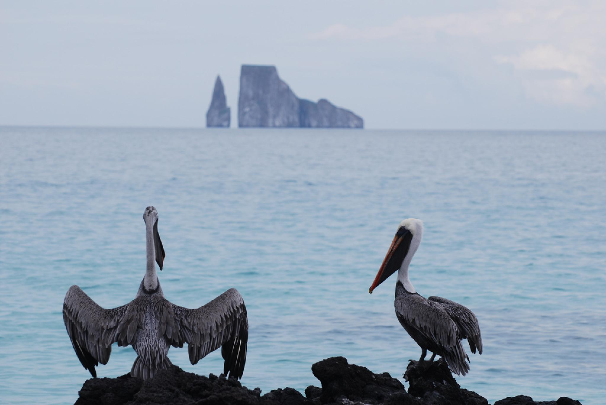 Kicker Rock - Leon Dormido Island Tour