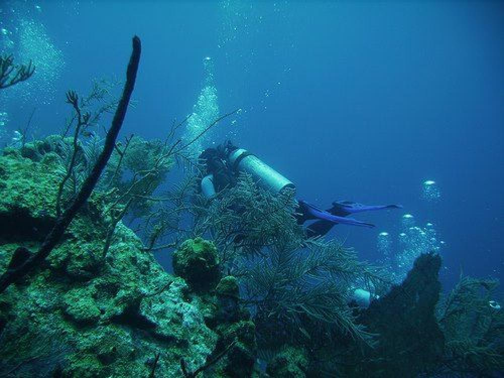 Local Reef Dive