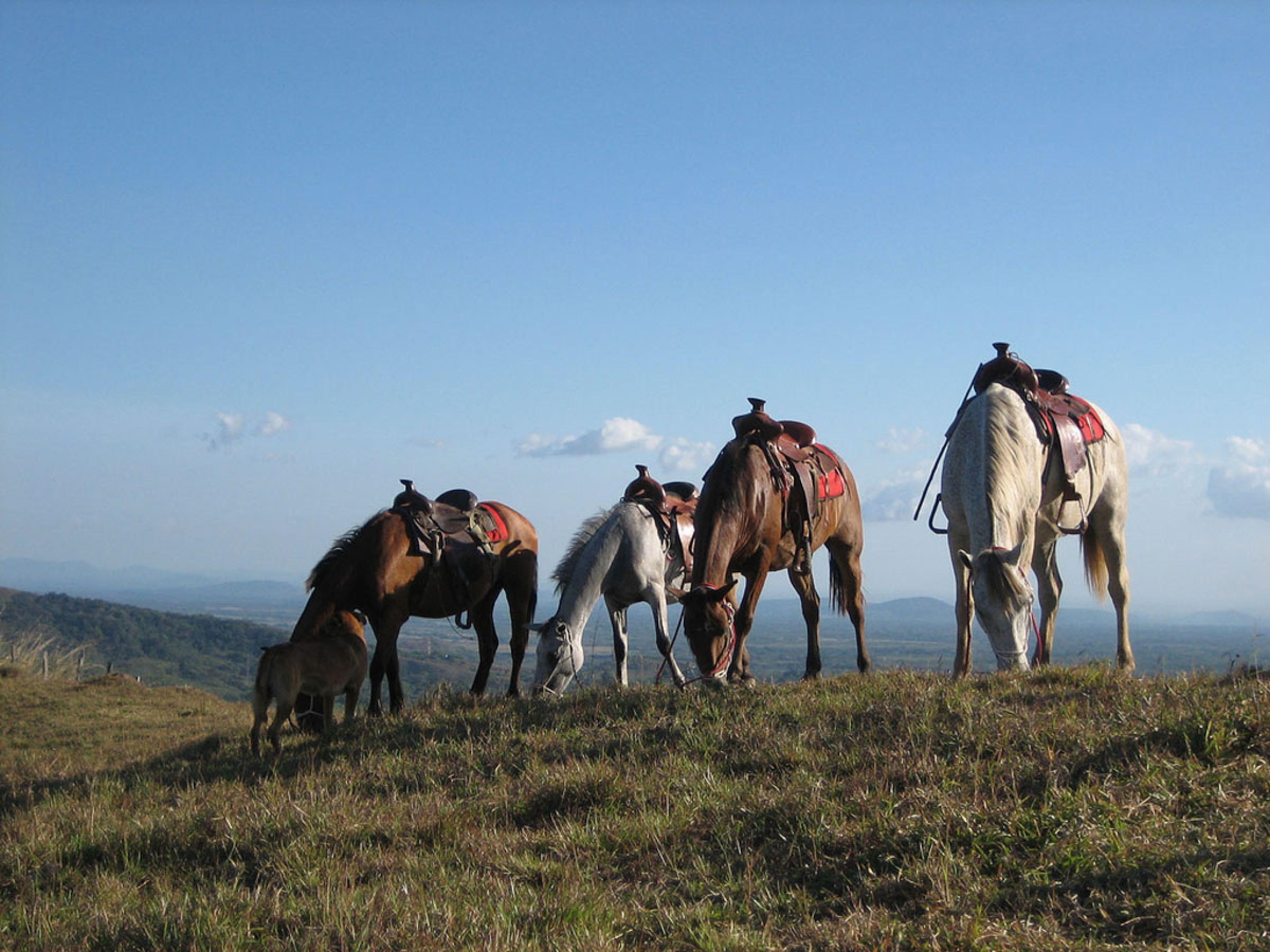 Lunch Horseback Ride