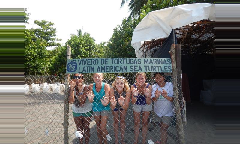 Pacuare Sea Turtle Volunteering