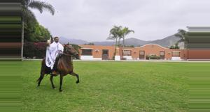 Peru Peruvian Paso Horse Exhibition