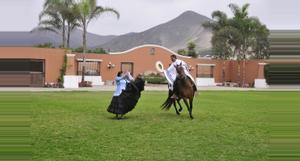 Peru Exhibición Caballo Peruano de Paso