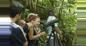 Costa Rica Rainforest Birdwatching Tour
