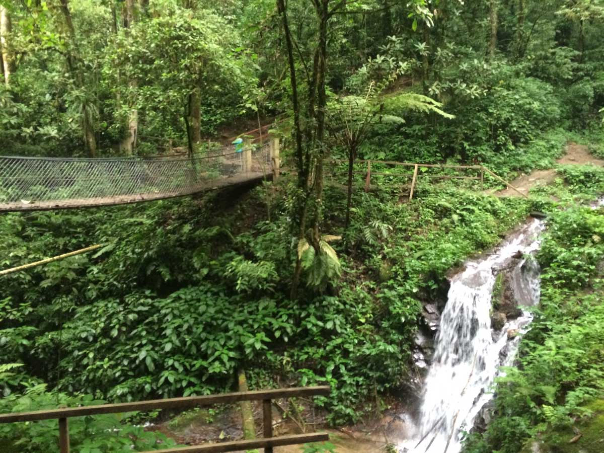Searching for the Quetzal