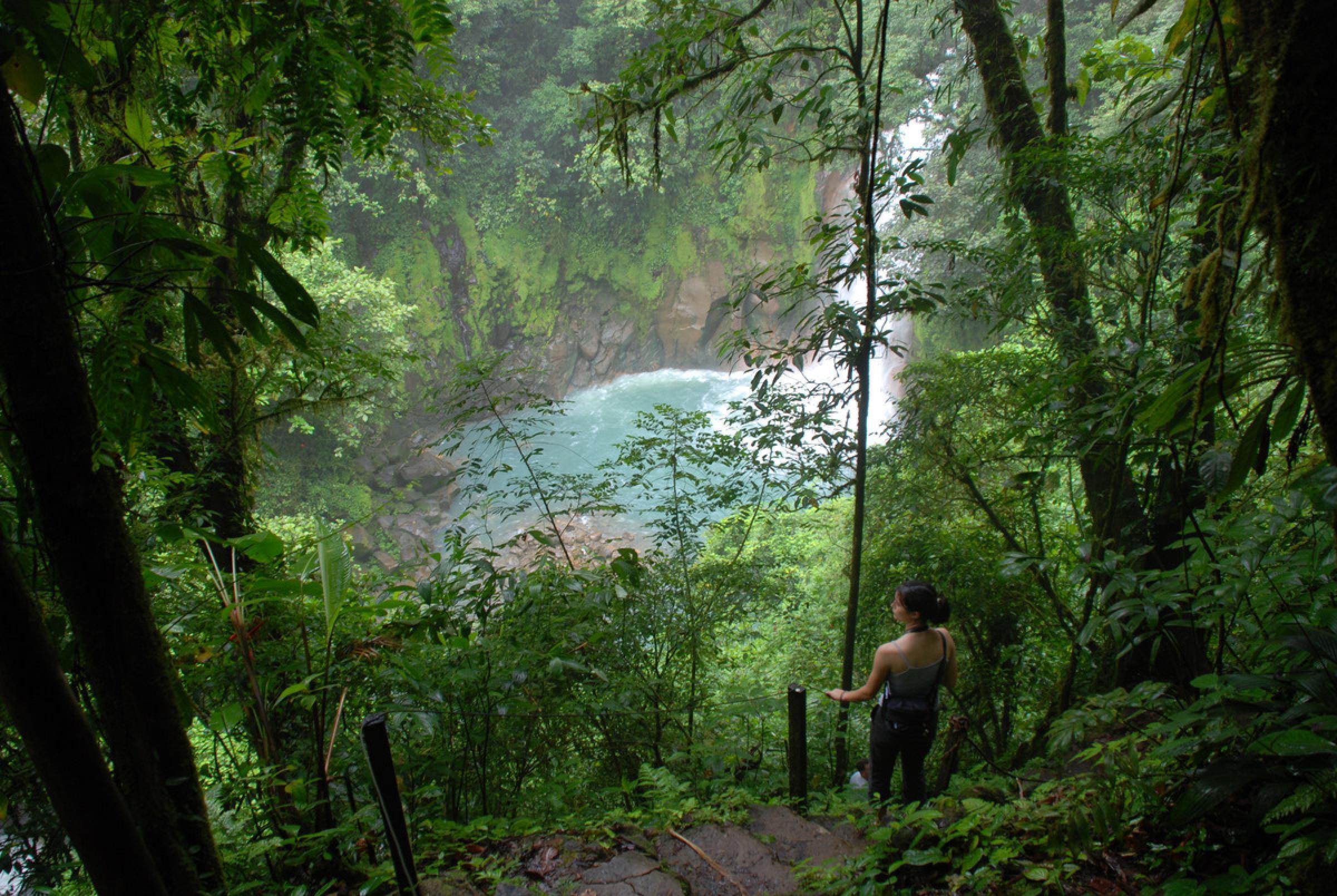 Río Celeste & Caminata Guiada por el bosque del Volcán Tenorio