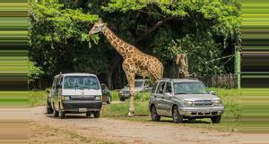 Guatemala Auto Safari Chapin Tour