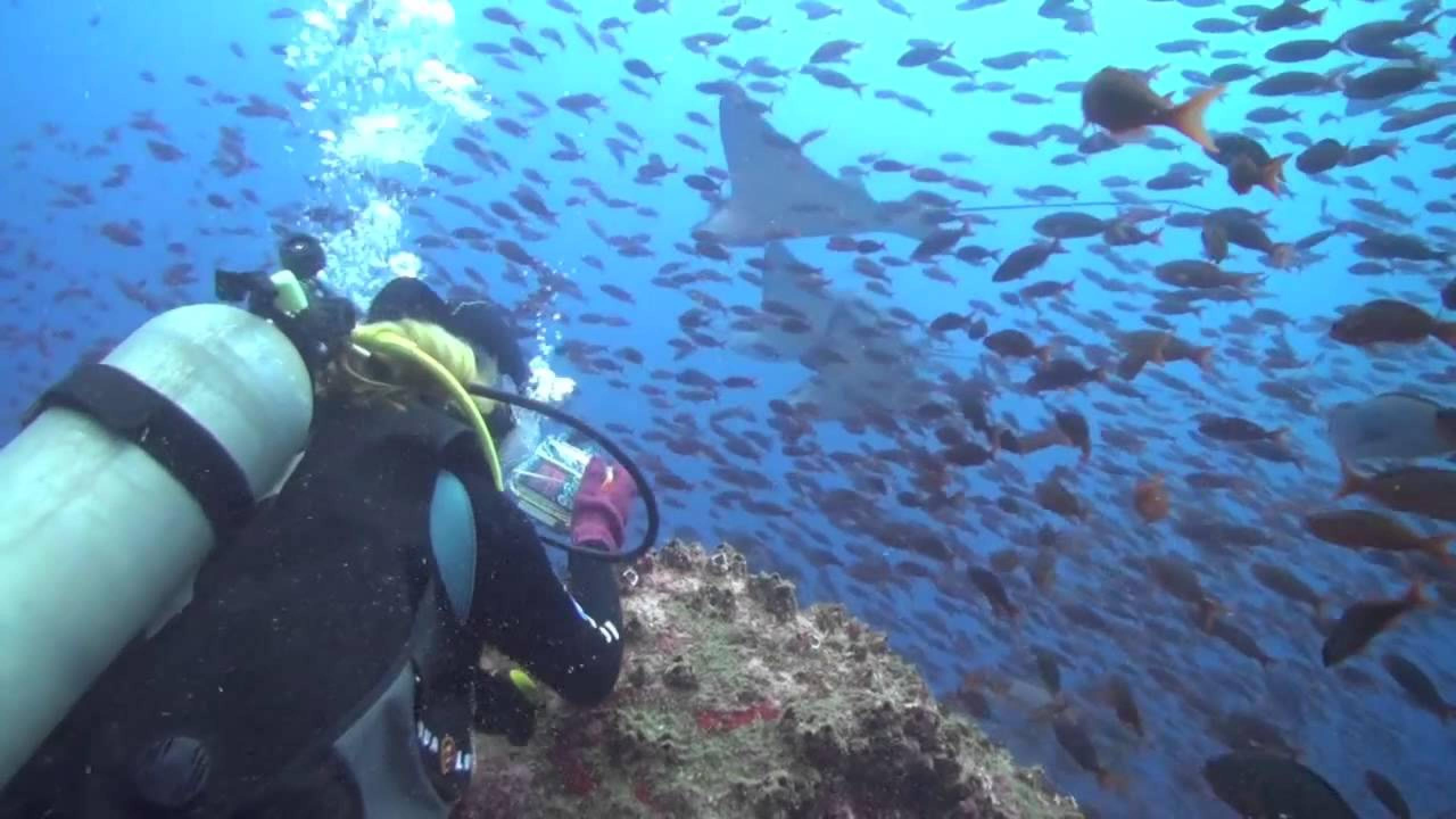 Scuba Diving in Galapagos