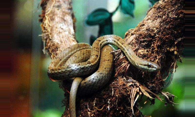 The Reptile and Amphibian Exhibit