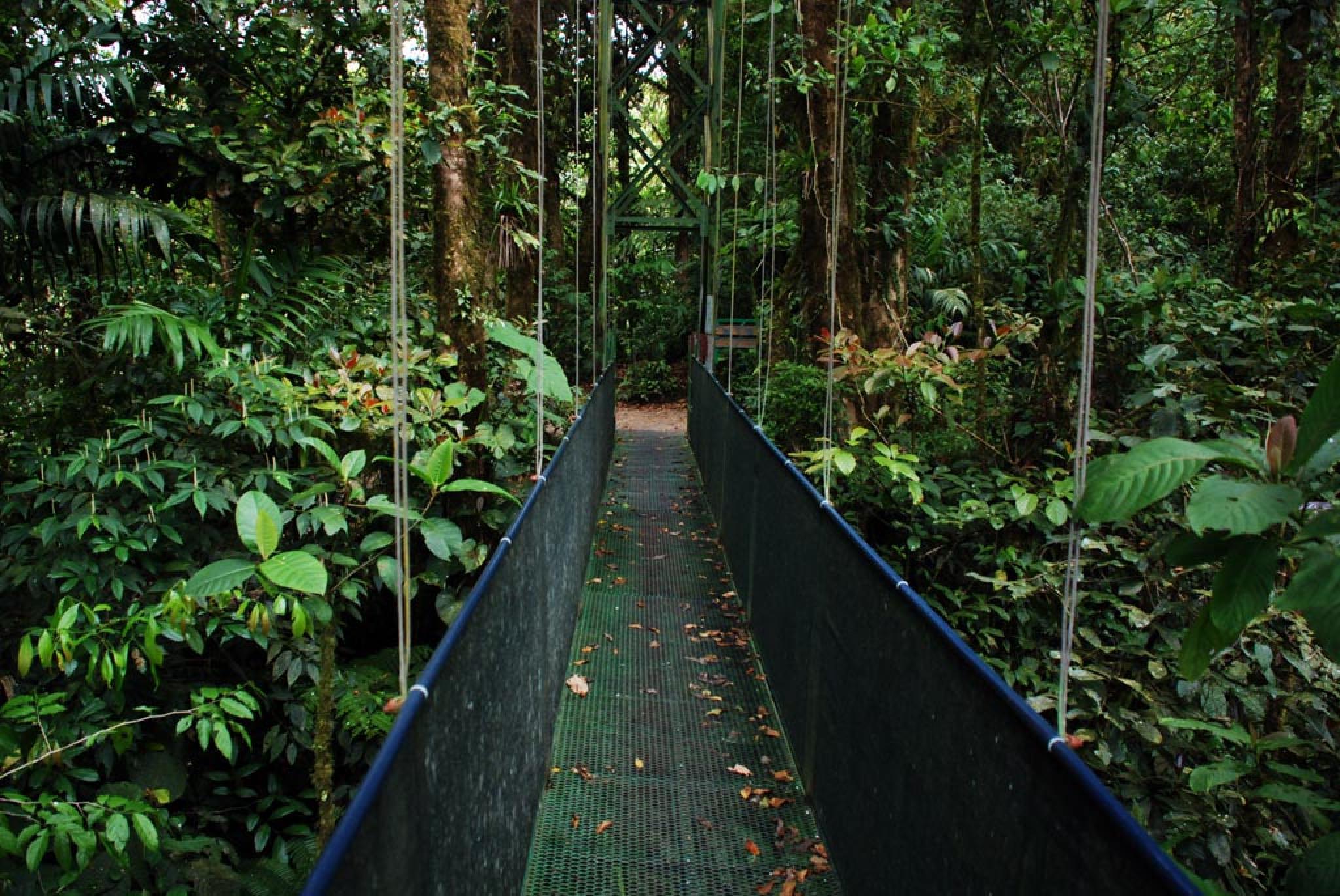 Sky Walk Guided Tour Monteverde