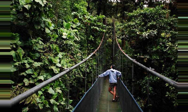 Sky Walk Guided Tour Monteverde