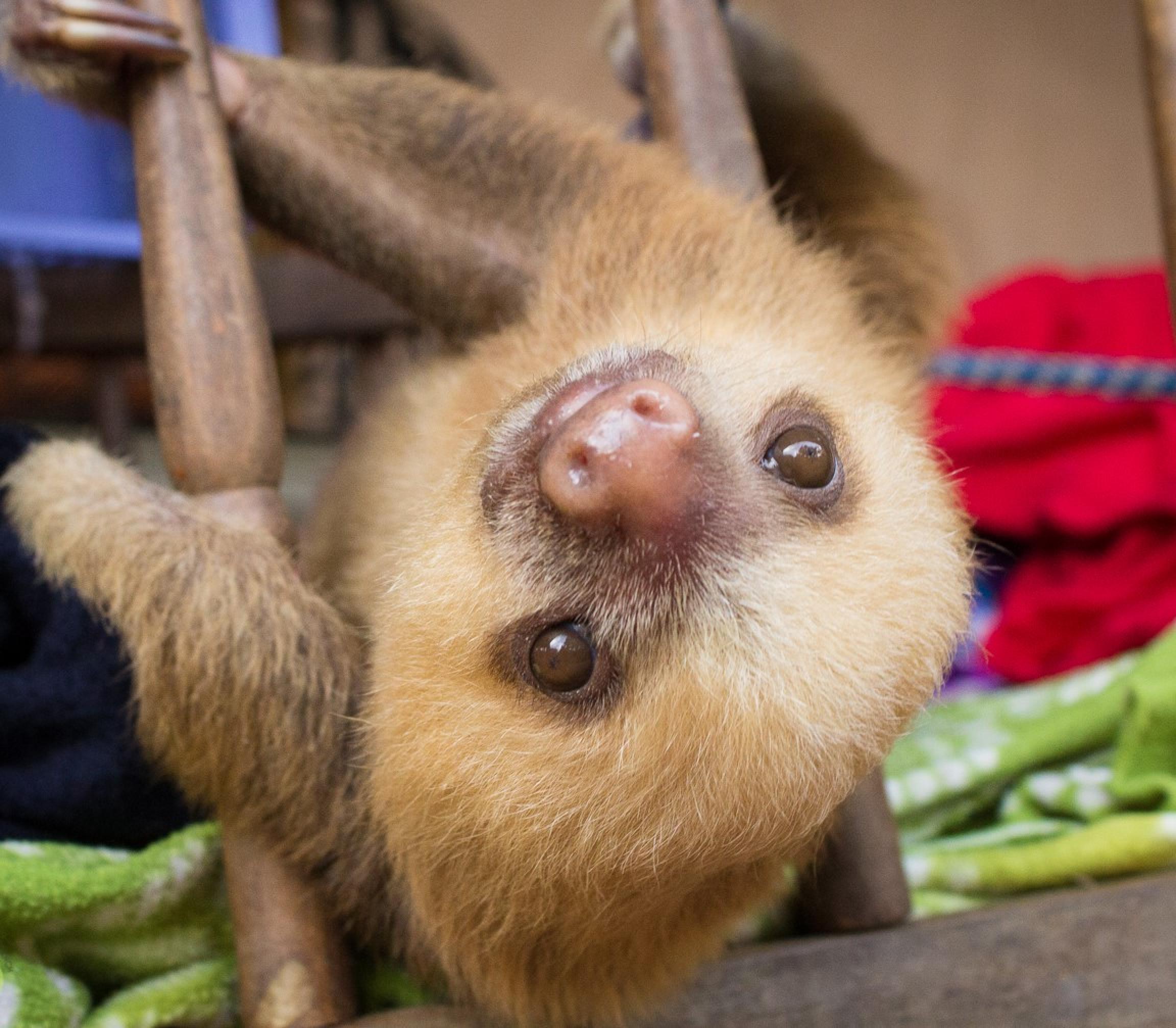 Slothies and Coffees Tour