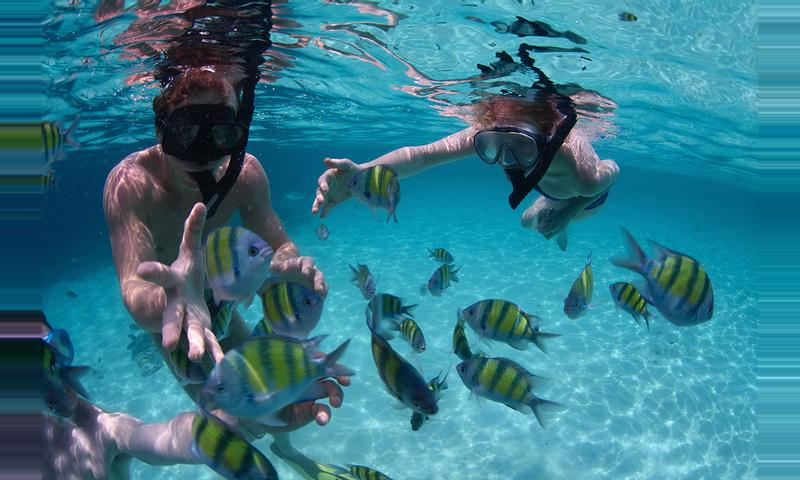 Mexico Rocks Snorkel Tour