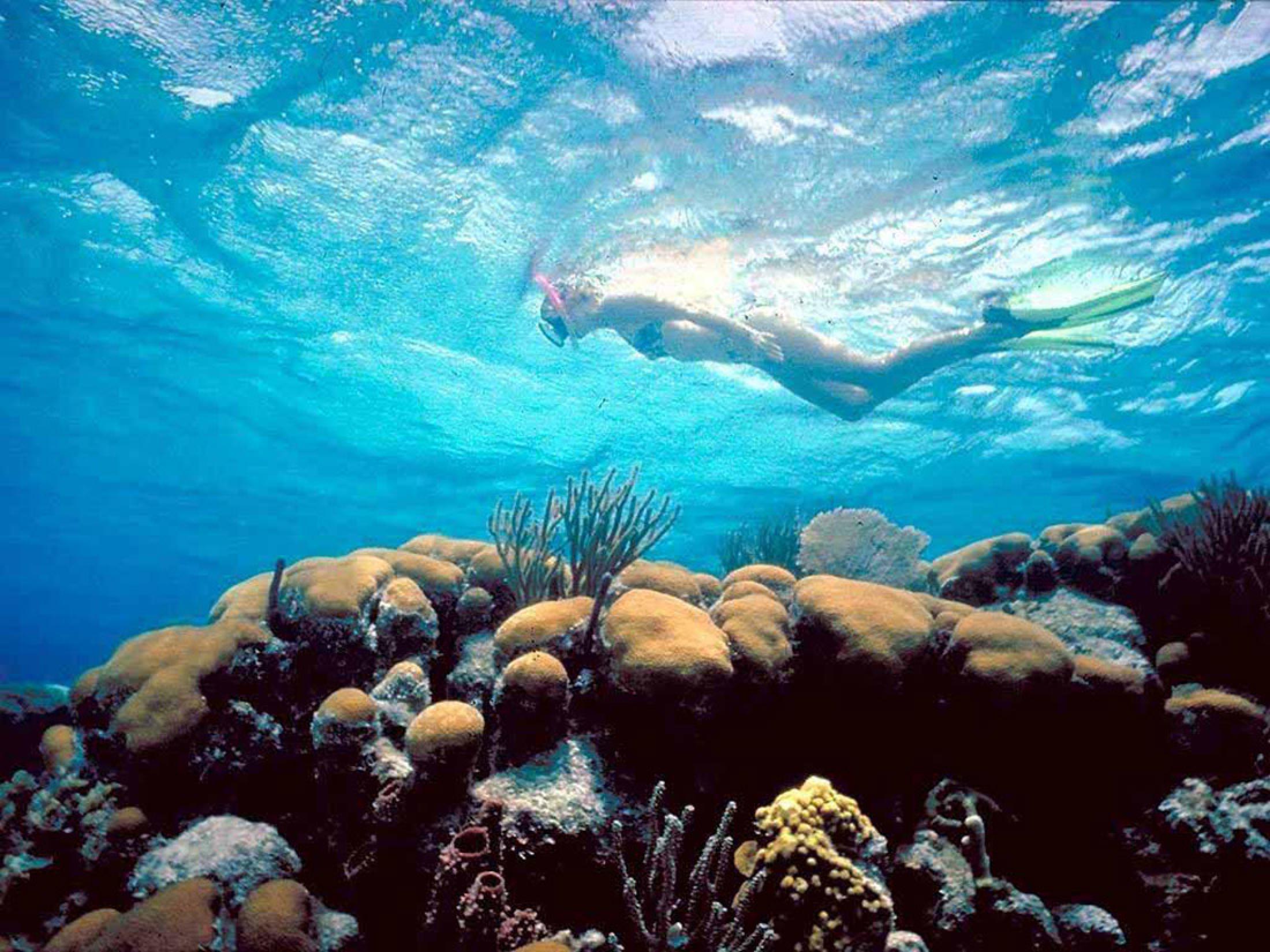 Snorkel Mexico Rocks