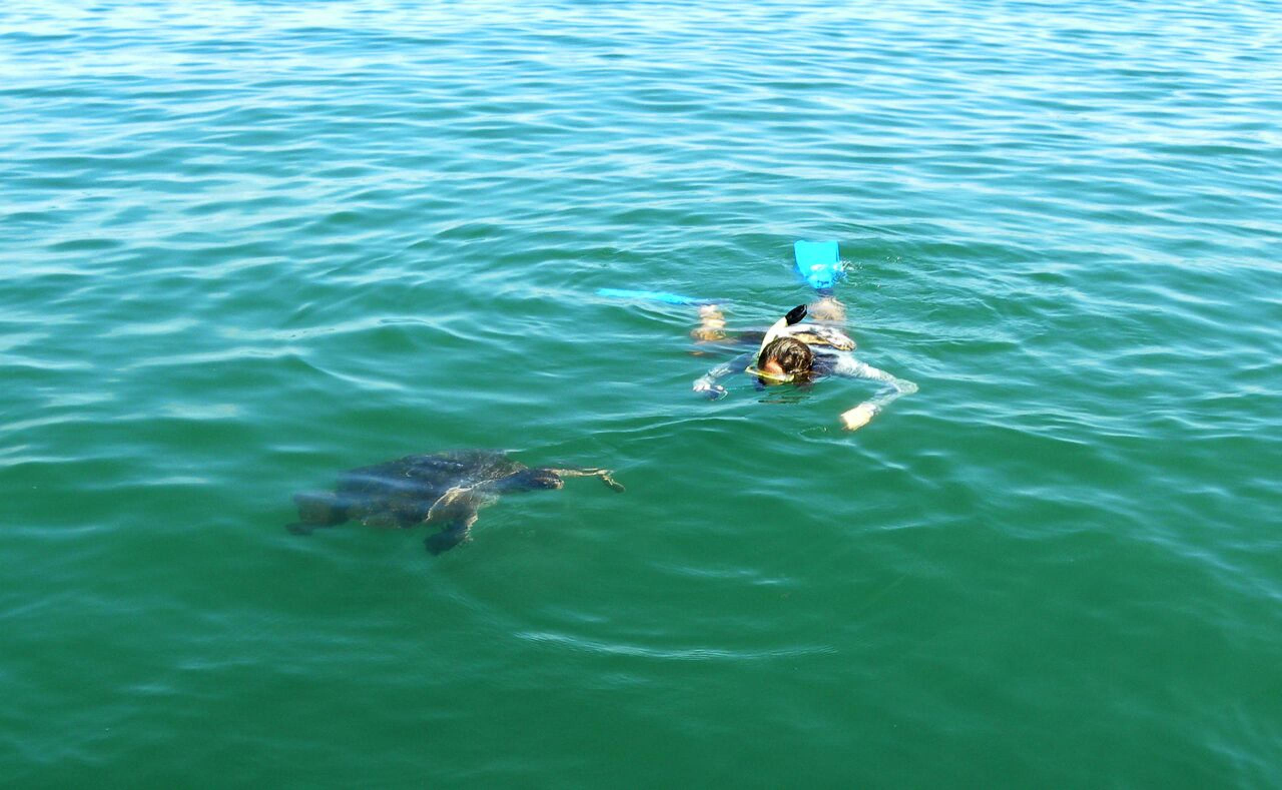 Snorkeling with Sea Turtles at Organos
