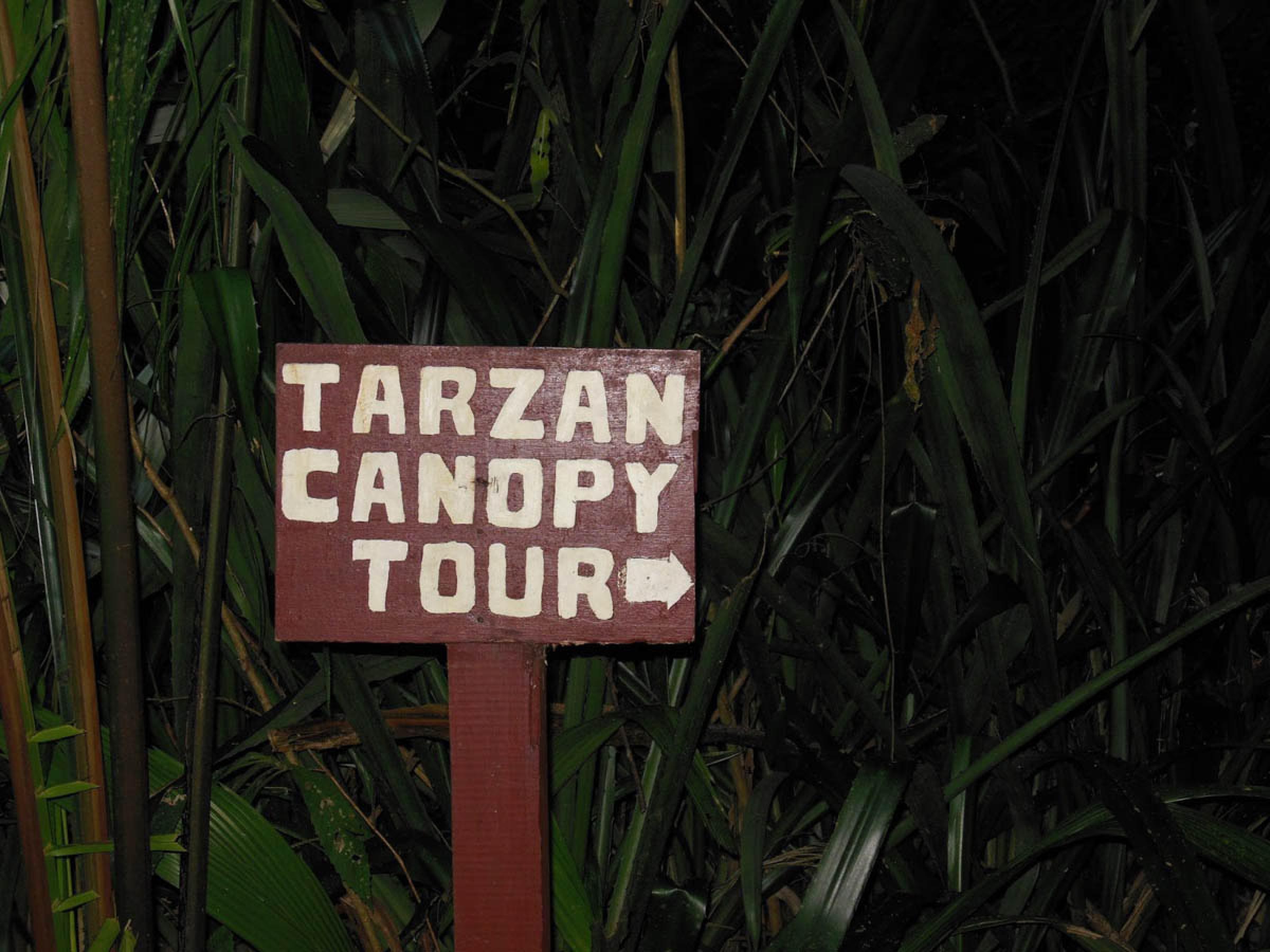 Canopy Tour Tarzán