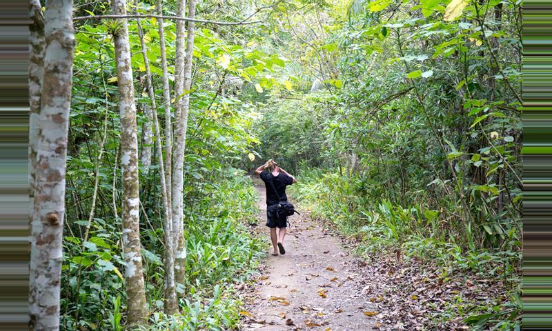 Topes de Collantes Natural Park Tour