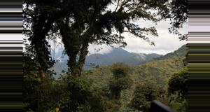 Panama Canopy Tour Tree Trek en Boquete