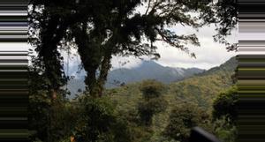 Panama Boquete Tree Trek Canopy Tour