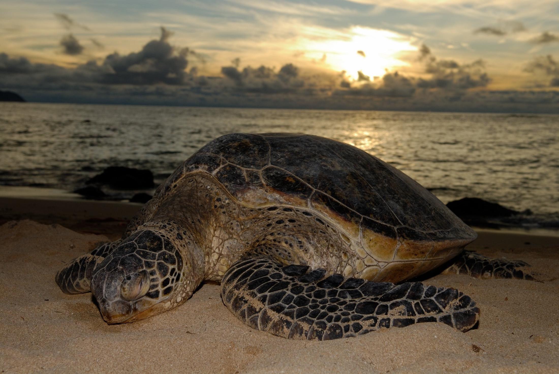 Turtle Nesting Night Tour