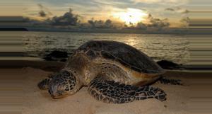 Costa Rica Tour Nocturno Desove de Tortugas