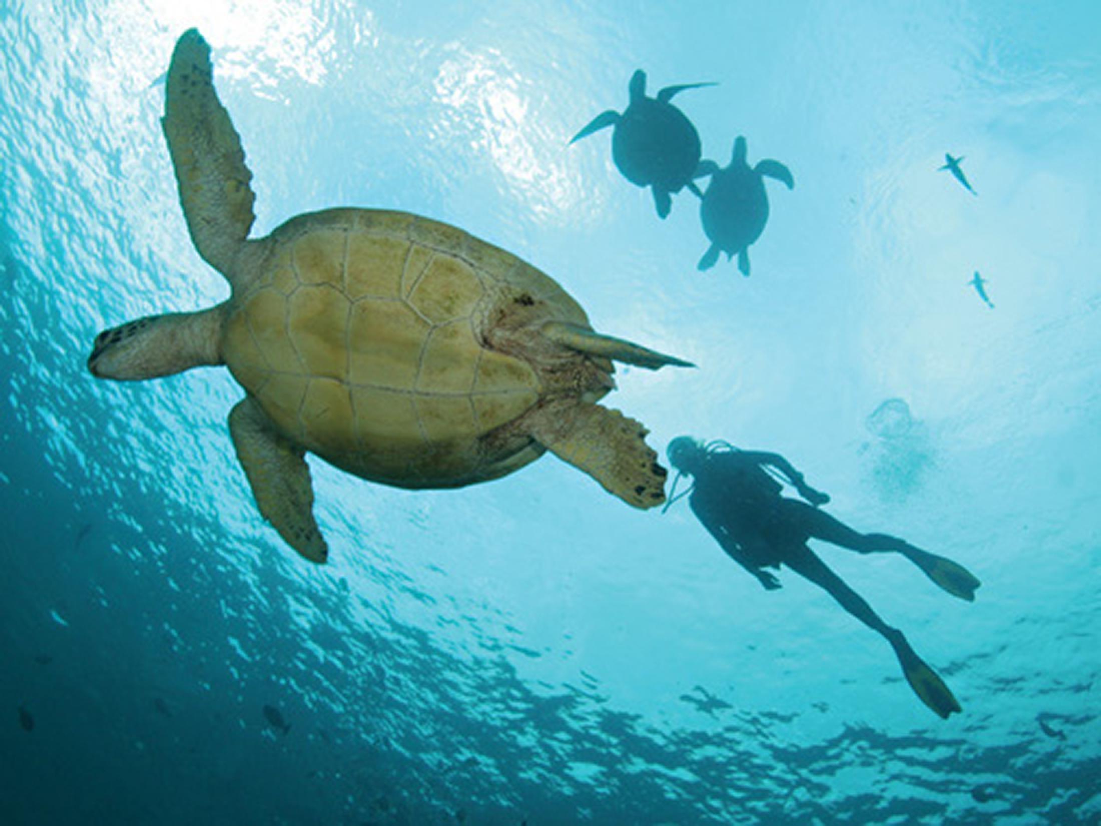 Two Oceans Scuba Diving Tour