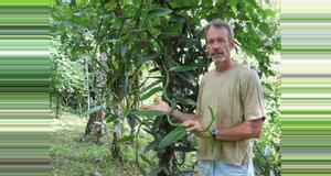 Costa Rica Plantación Villa Vainilla Spice