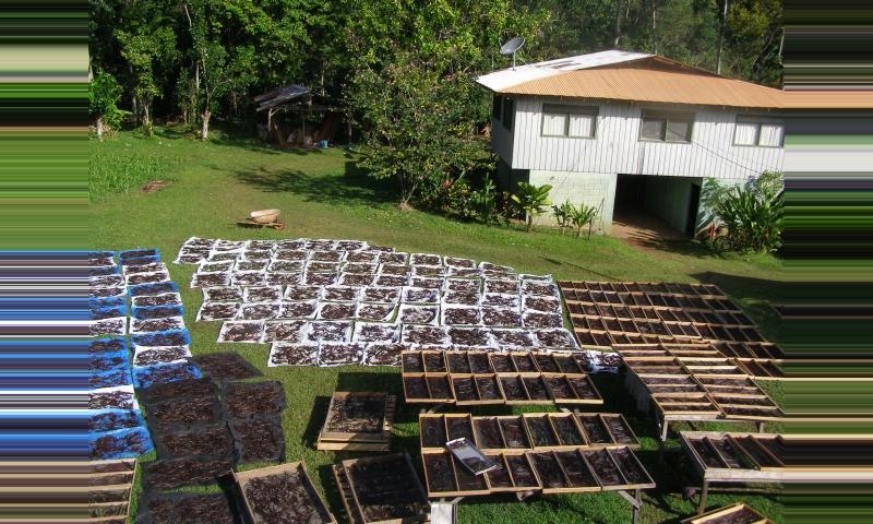 Cocoa Plantation Tours Costa Rica